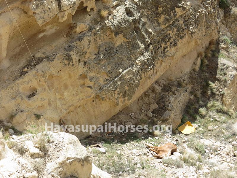 horseandmulefall3.jpg