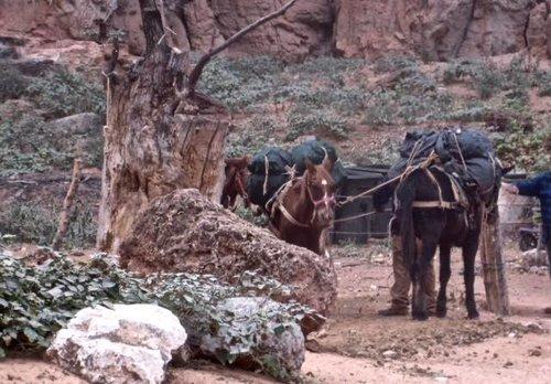 tiedhorses2.jpg