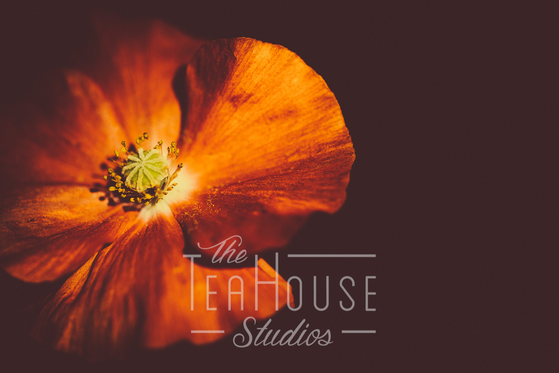 TheTeaHouseStudios@2017.Portfolio-5.jpg
