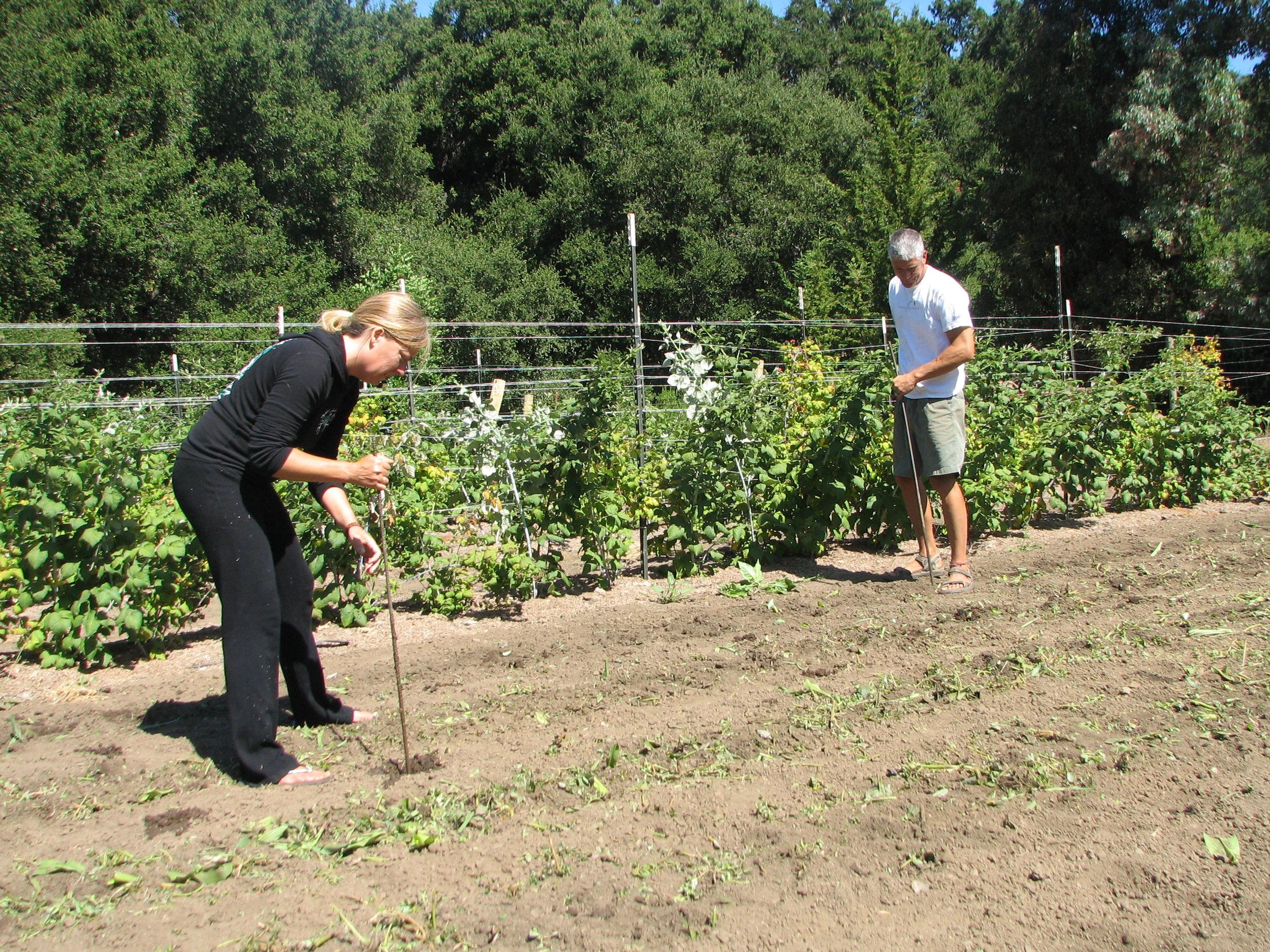 CG-soil remediation2-day1treatment.JPG