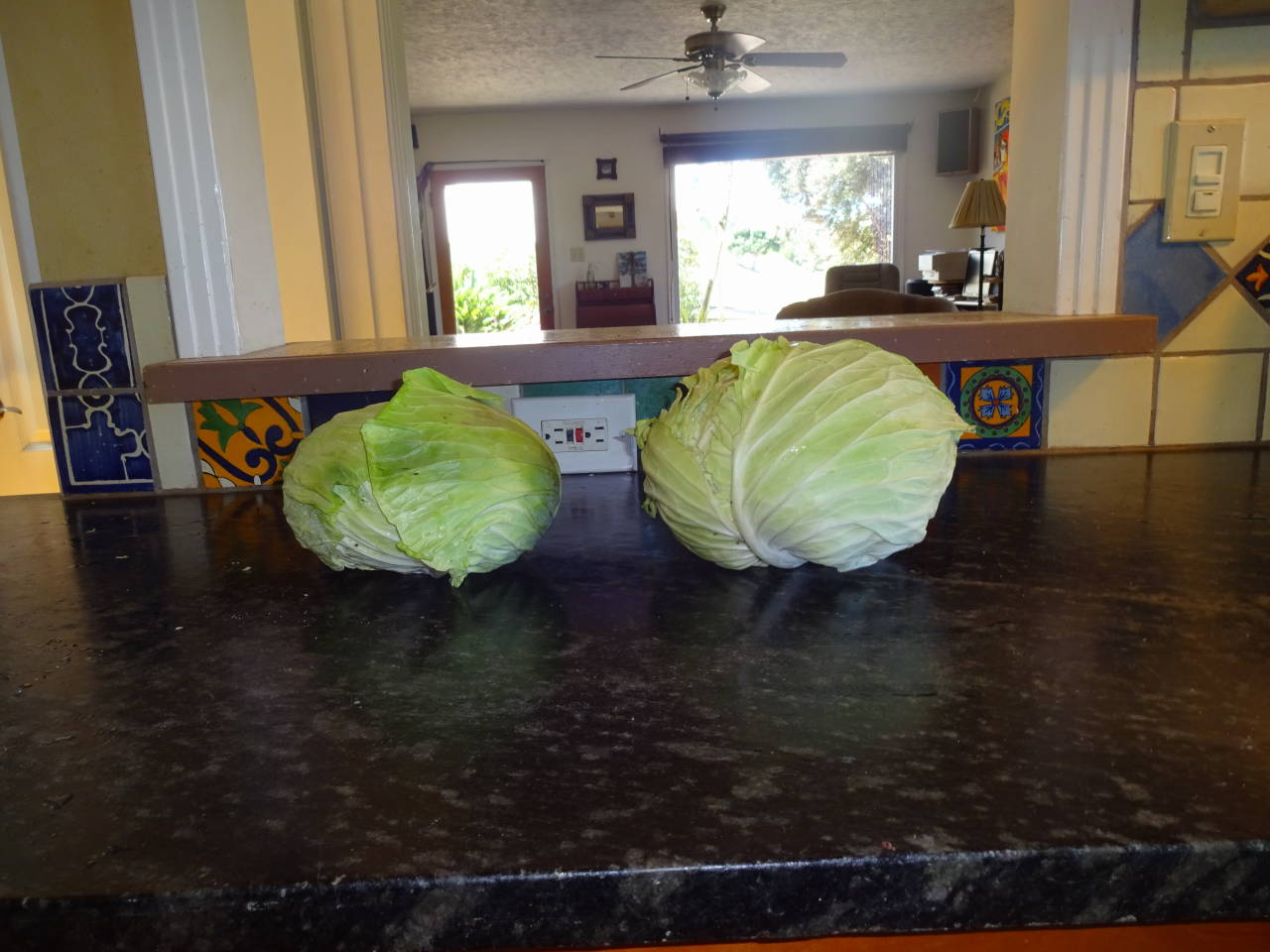 Left cabbage 3.5 lbs; right cabbage 4.5 lbs
