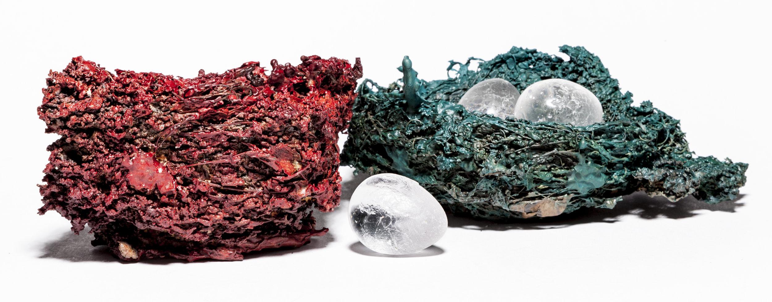 BaleCreekAllen Nests-037.jpg
