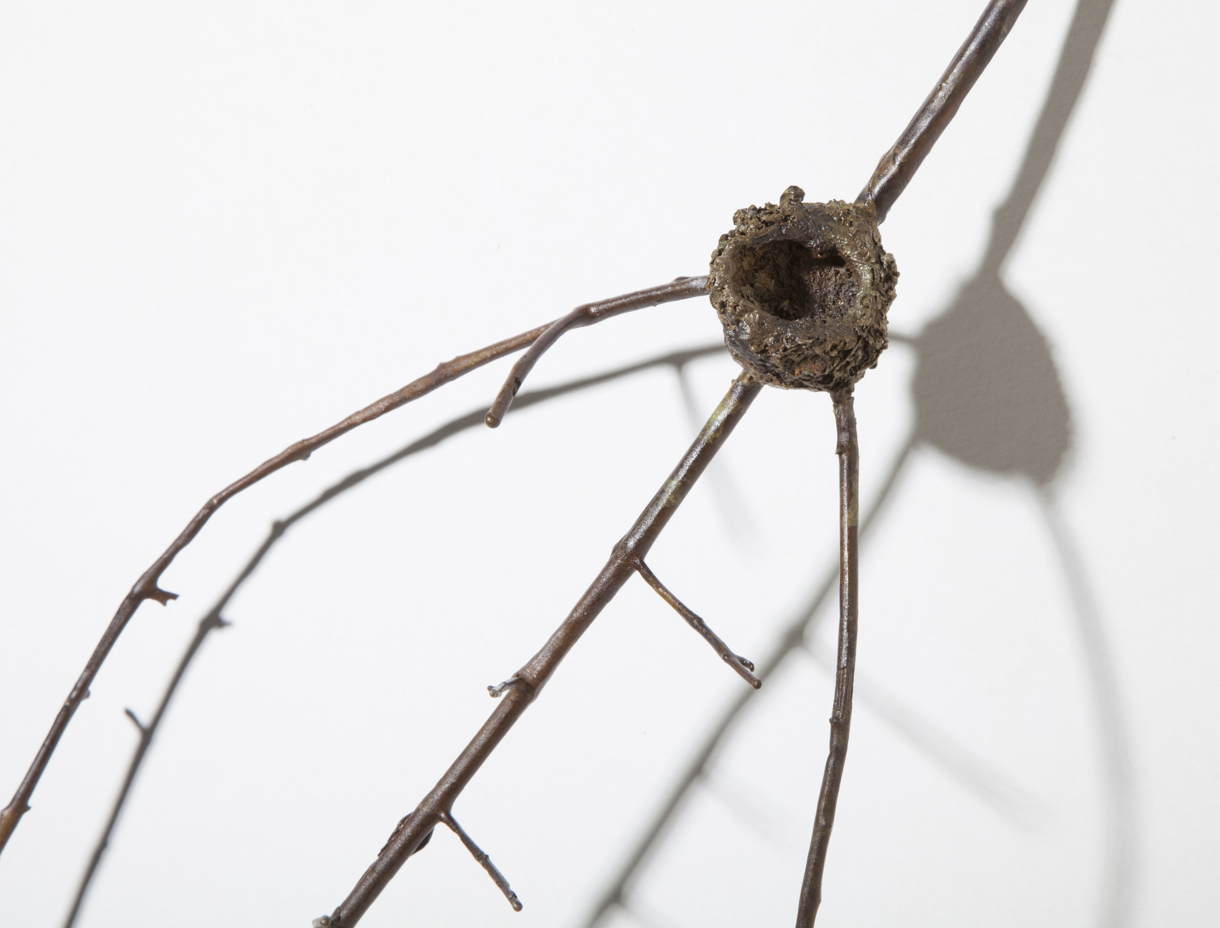 BaleCreekAllen Nests-041.jpg