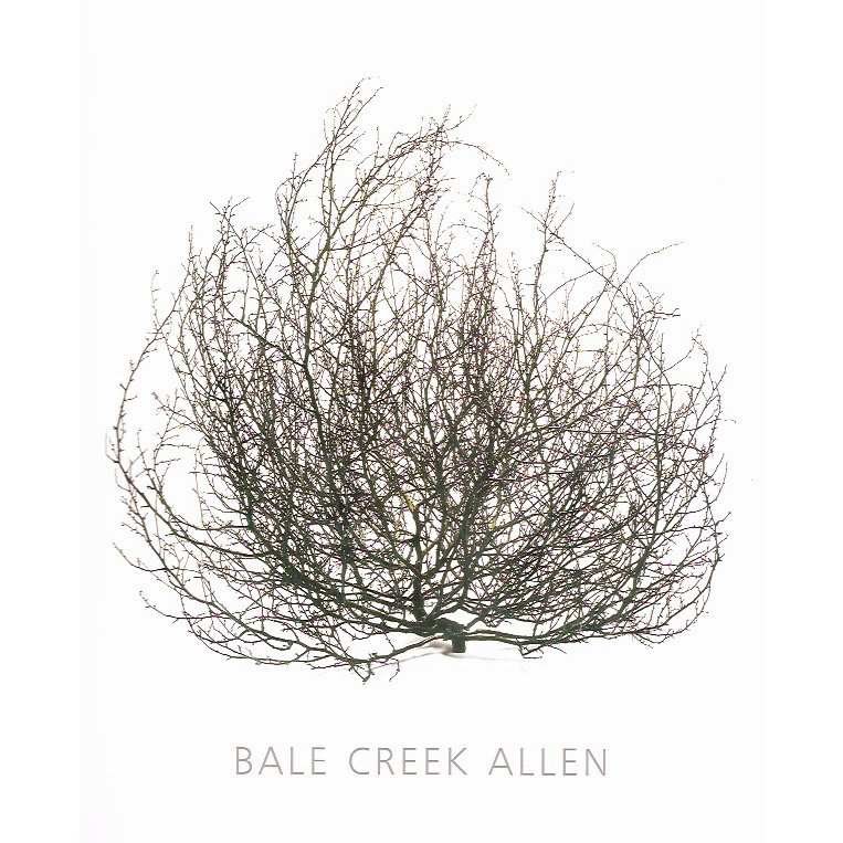 BALE CREEK ALLEN CATALOG
