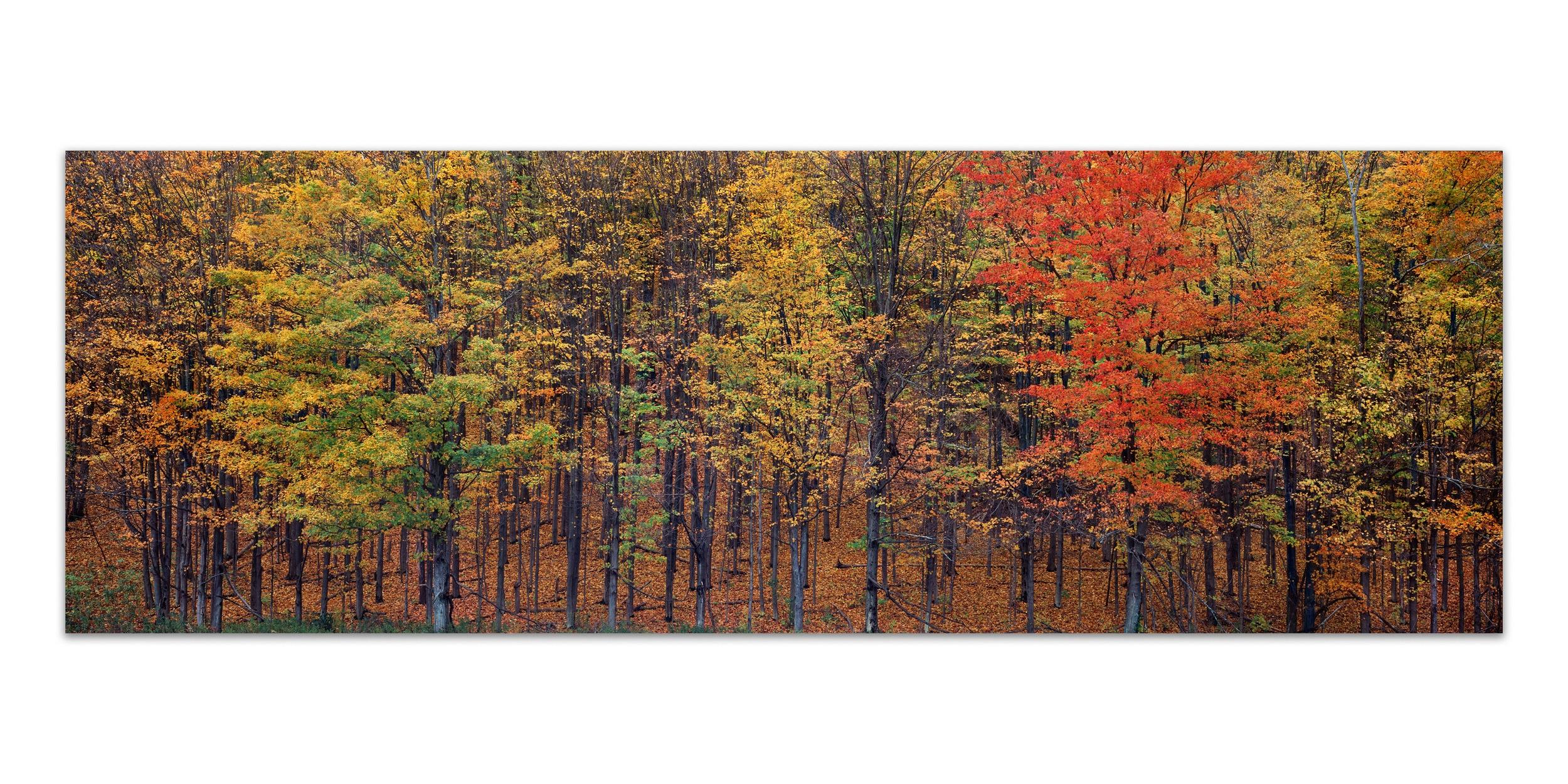 Autumn Whisper Single Image 12%22 Bookjpeg.jpg