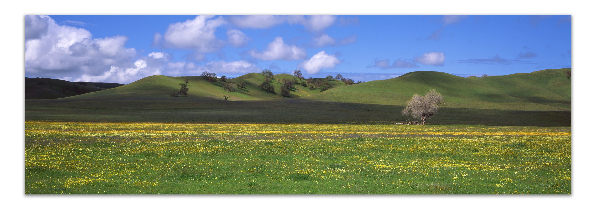Light Play on a Broad Meadow   | California |  Edition of 11    Clouds pass on a spring afternoon casting shadows across the brief sea of green covering the hills of California's Central Valley.    20x60, 24x72, 30x90, 40x120, 50x150 (Panels Only)