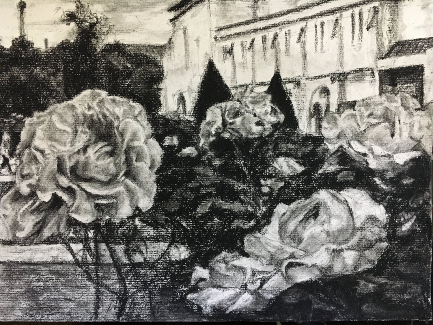 Roses within Garden at Musee Rodin in Paris