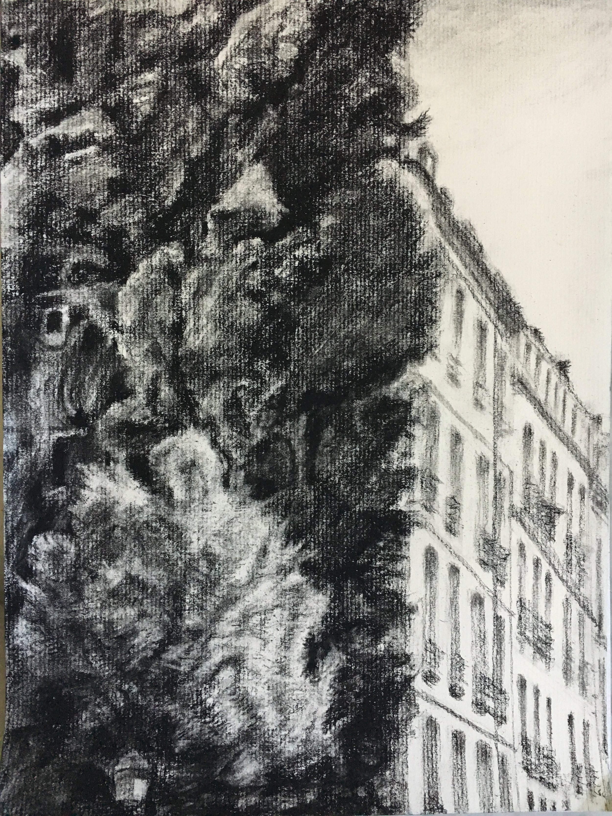 Charcoal Drawing on Vertical Garden Wall
