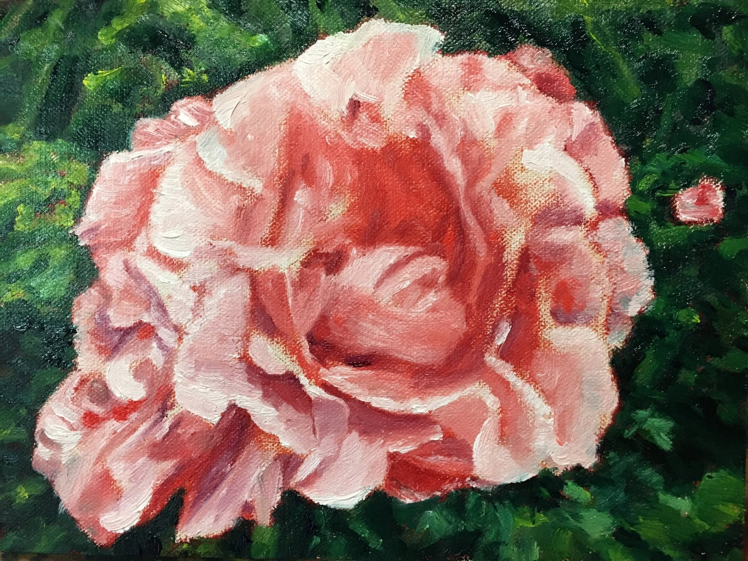Quick Study of Rose at Musee Rodin Garden (07 April 2018)