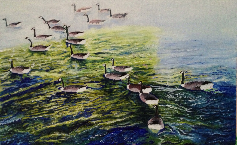 Swans on Avon River at Stratford