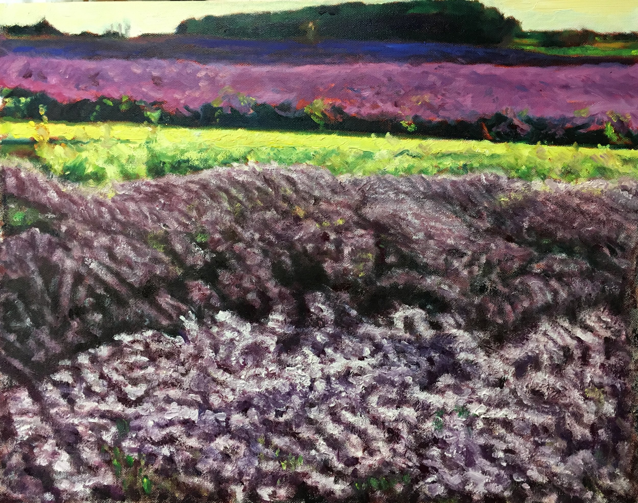 Lavender Fields near Snowshill (20 Feb 2019)