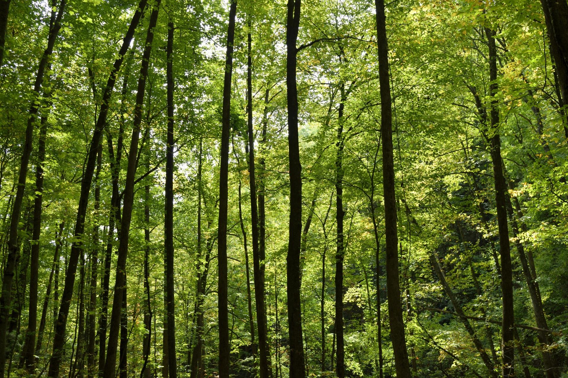 forest-background.jpg