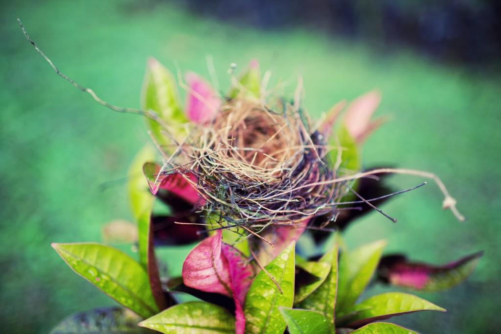 nest1-1024x682.jpg
