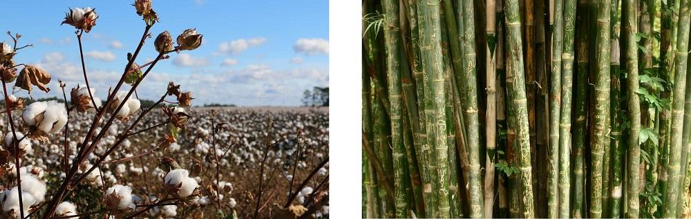 """ColieCo uses cotton jersey fabric made from organically grown bamboo."" - ColieCo.com"