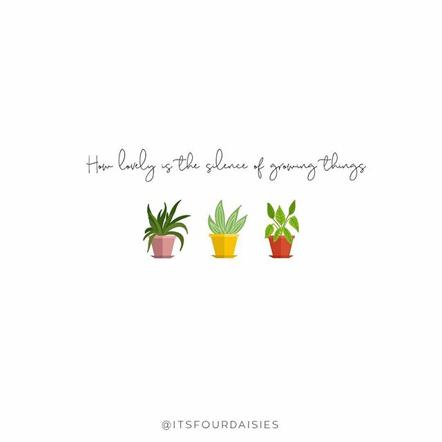 Happy Sunday! ☀️ And what a beautiful day here in Melbourne! It's like summer has come back for a visit 😍 ⠀ ⠀ This quote seemed particularly fitting as I've recently got into indoor plants 🌿 I have acquired four in the space of two weeks, just went all in really, and here's hoping they all live 🤞 I have high expectations, but who doesn't at the start of something new?! 😏⠀ .⠀ .⠀ .⠀ ⠀ Vectors are from from vecteezy.com 🌱