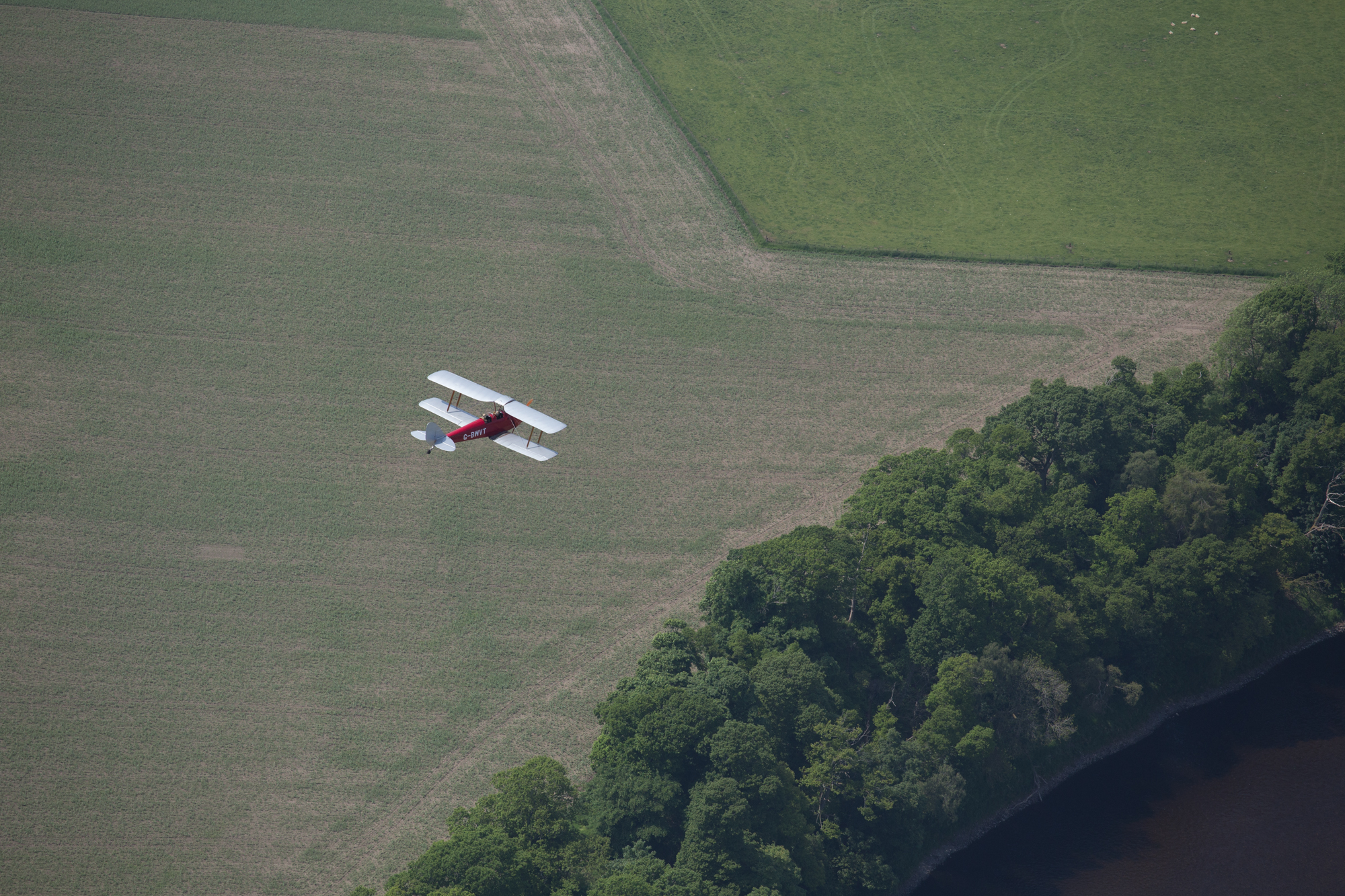 Tiger Moth-8.jpg