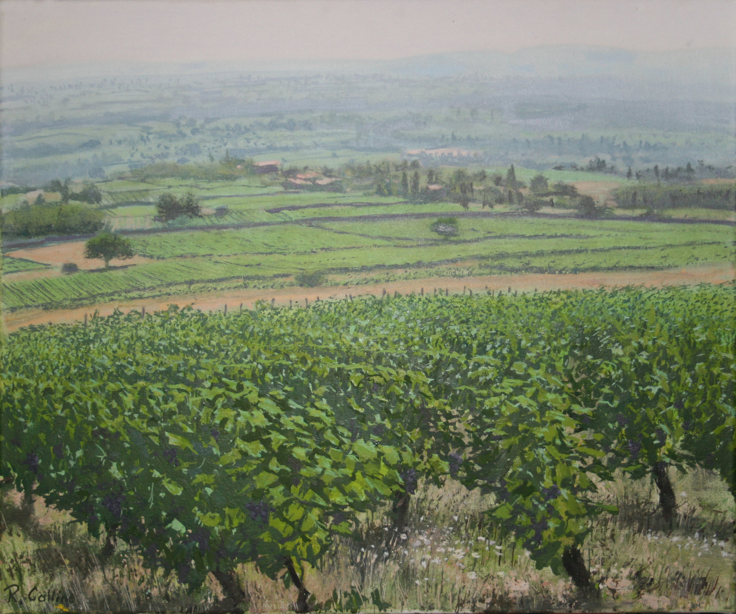 Vineyard at Lachassagne