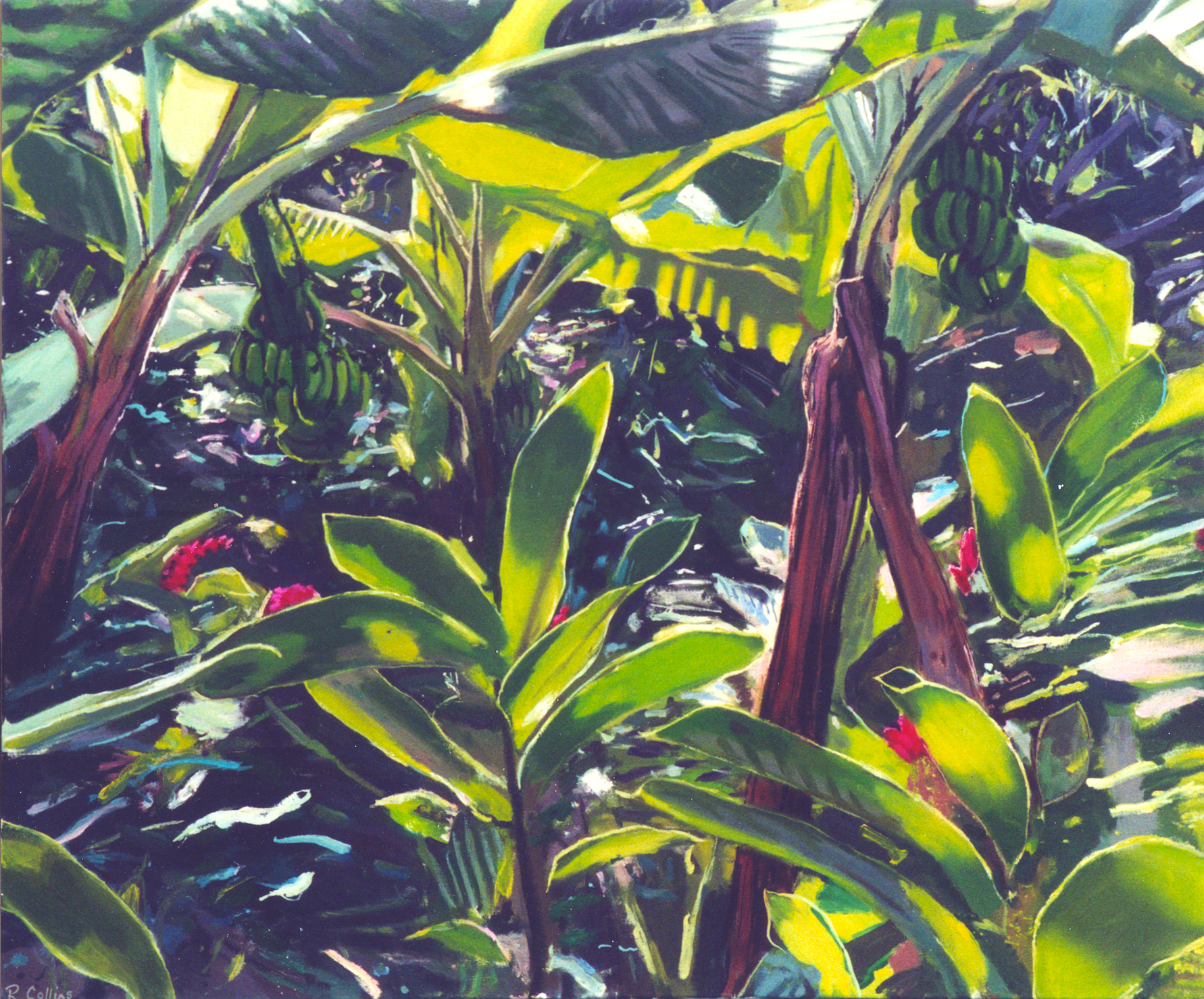 Banana Palms and Ginger Lilies