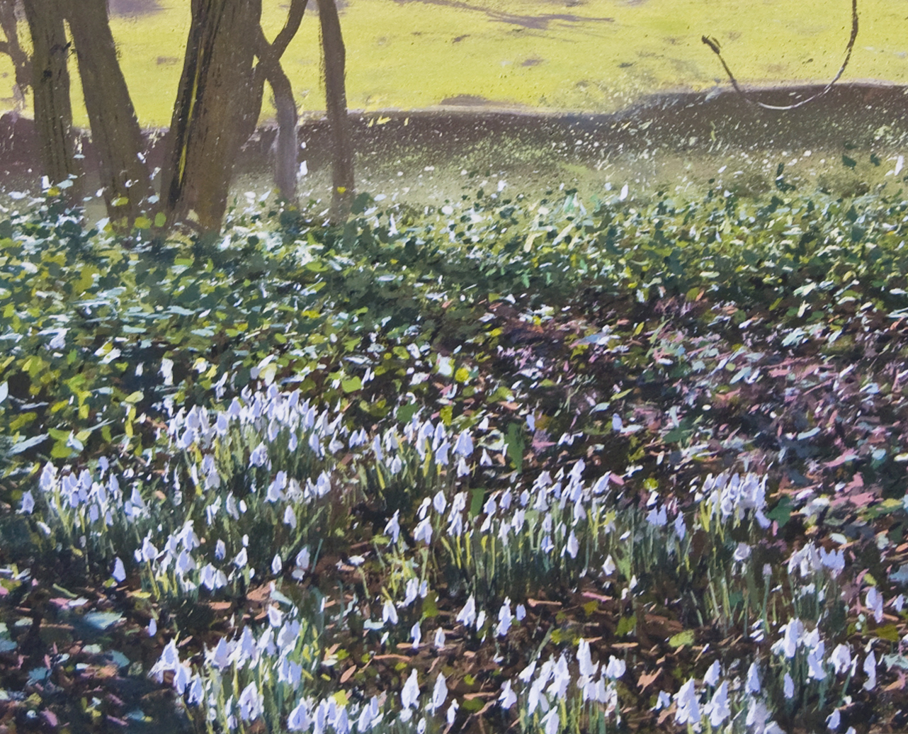 Snowdrops at Newark Park