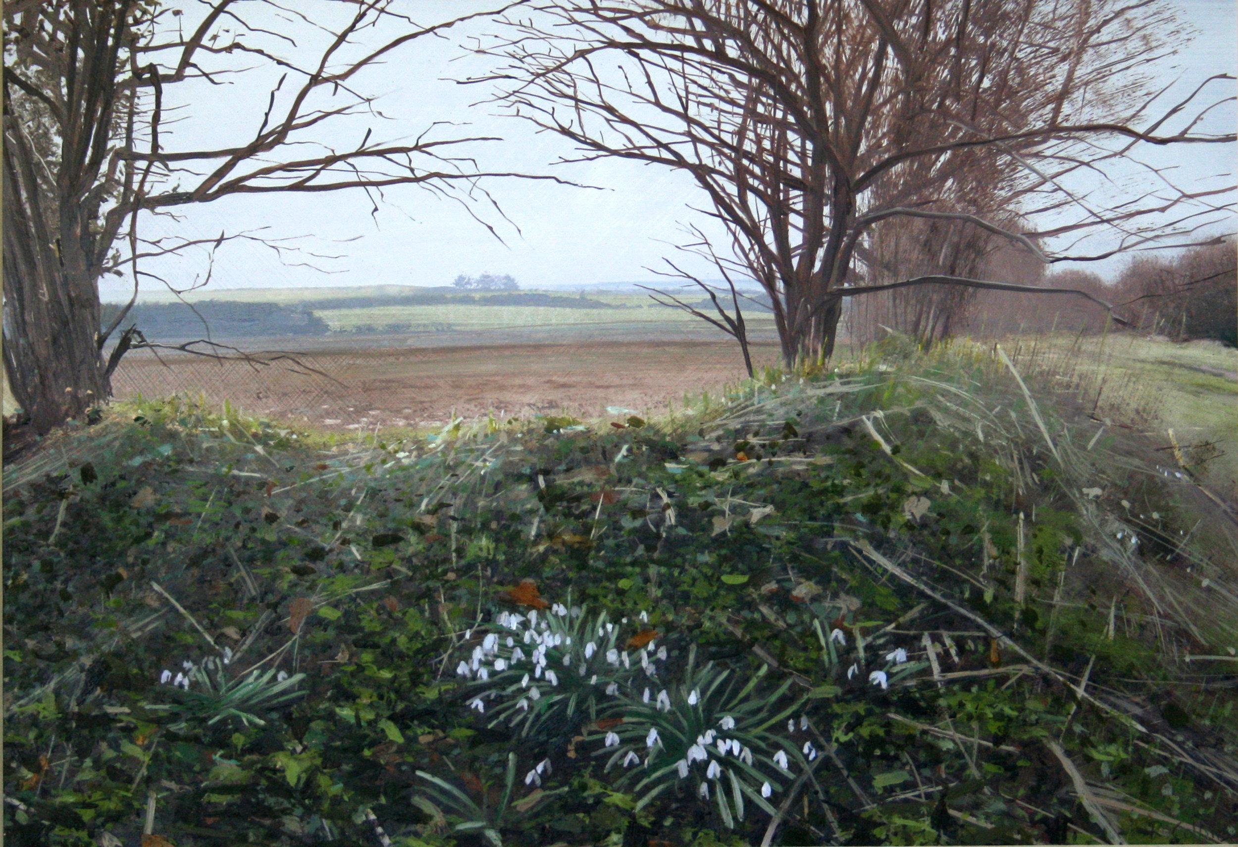 Snowdrops on the Ridgeway