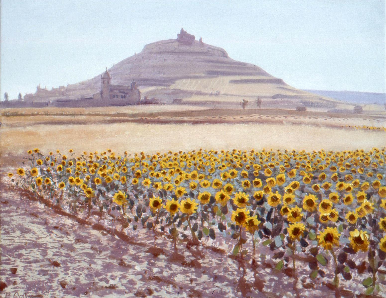 Sunflowers at Castrojeriz