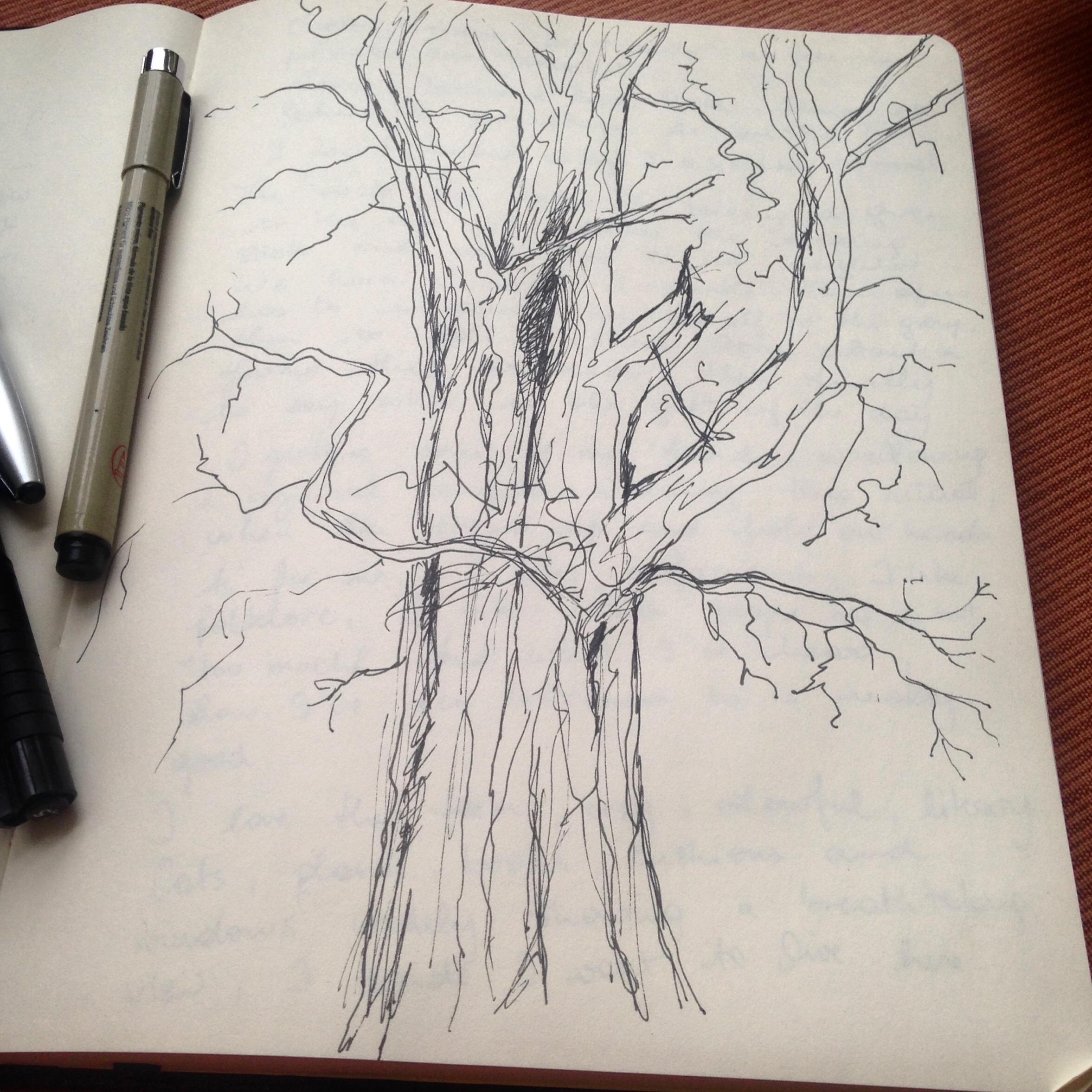 Locust sketch Aurelie.JPG