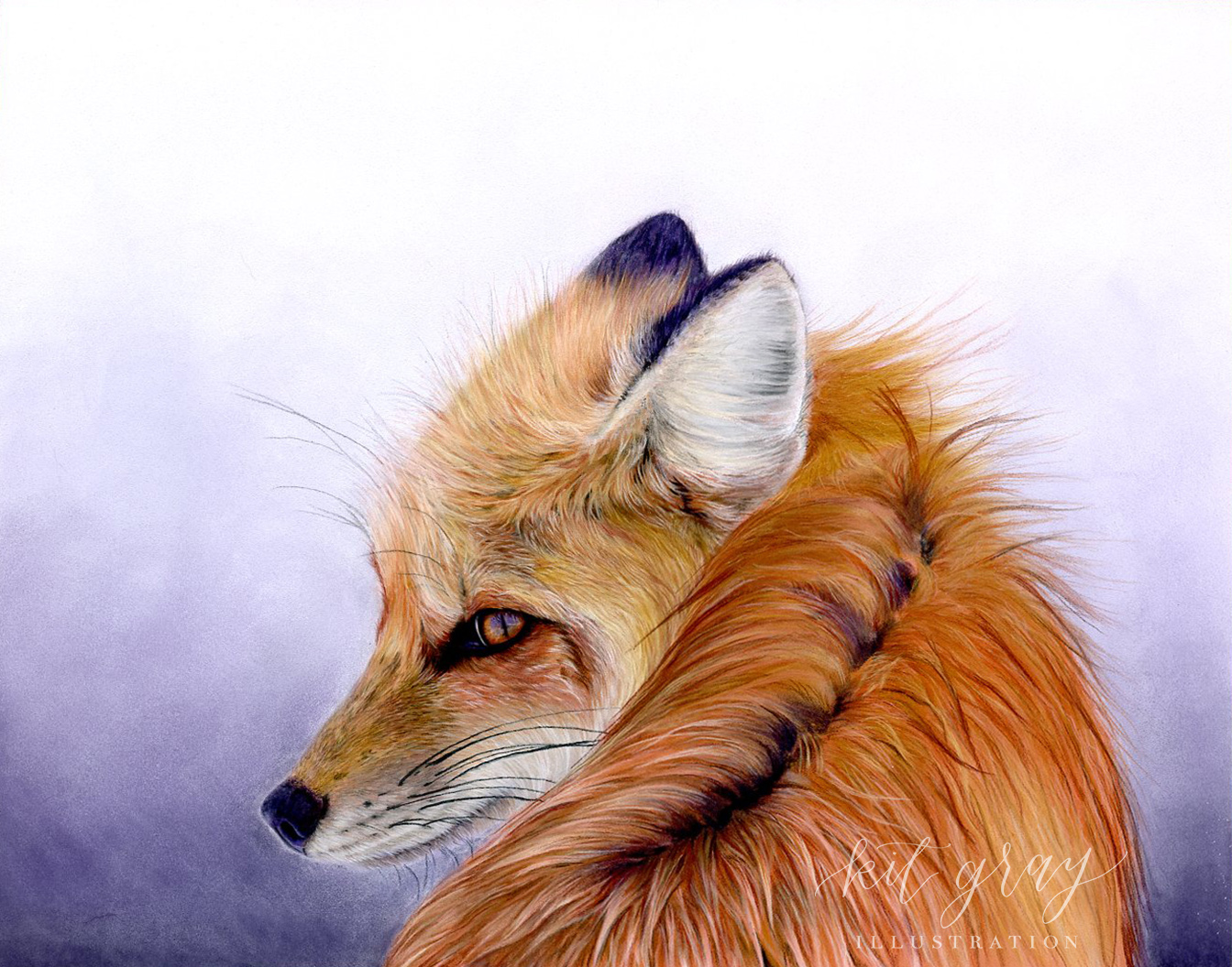 "Red Fox - Pastel, 11"" x 14"" [FOR SALE]"