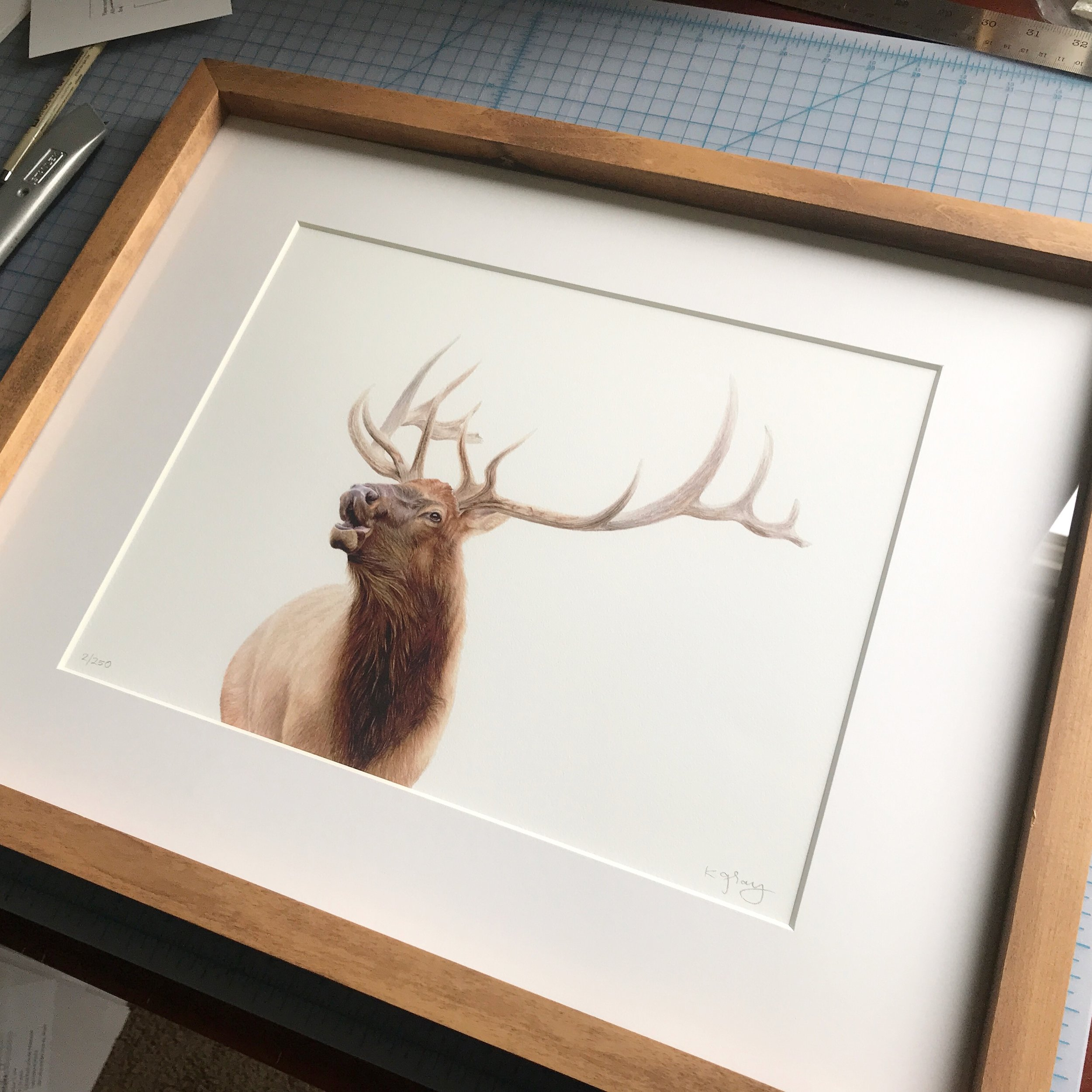 """""""Autumn Rut"""" Limited Edition Print  of colored pencil artwork"""
