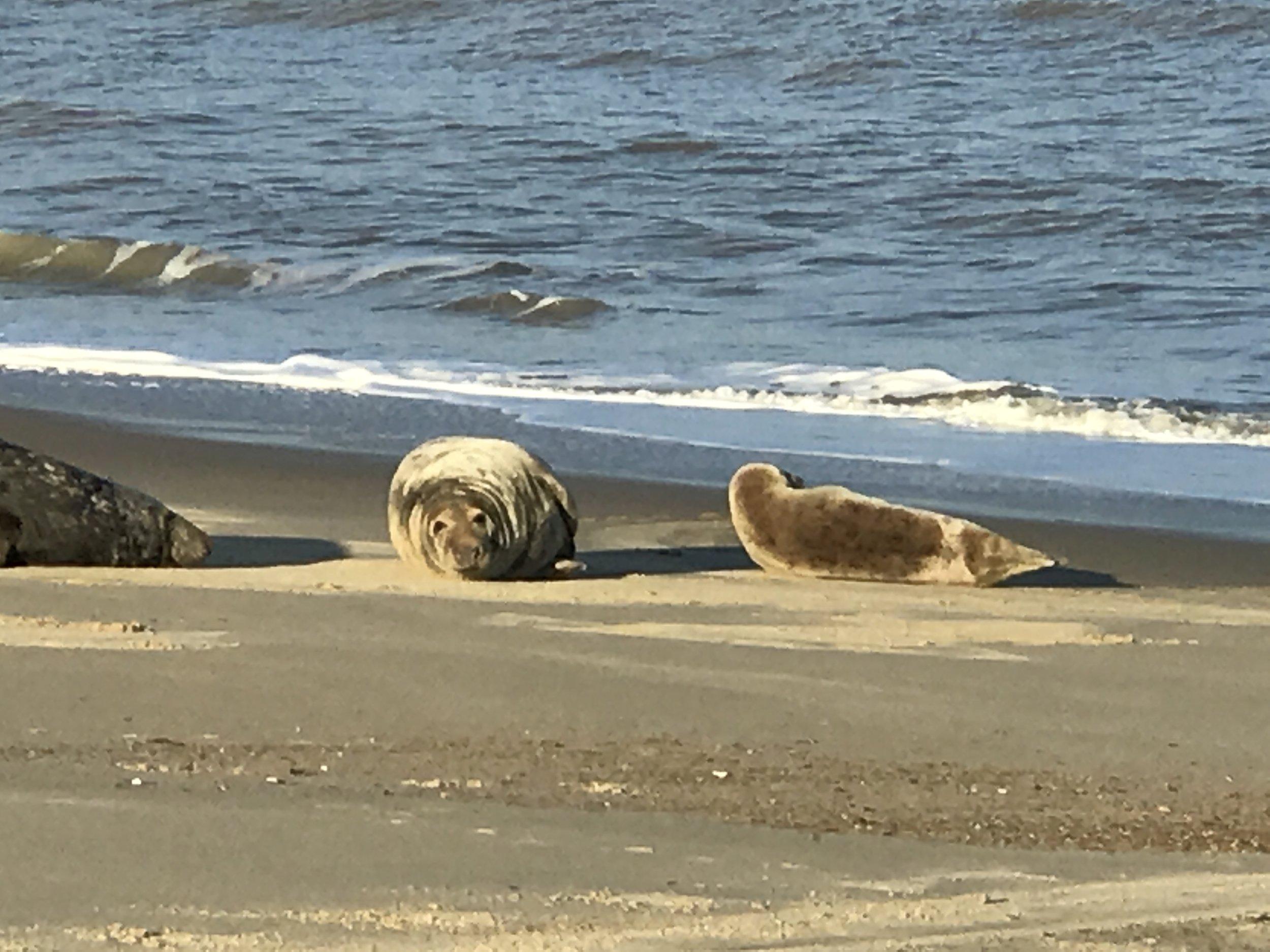 Blakeney-Seals.JPG