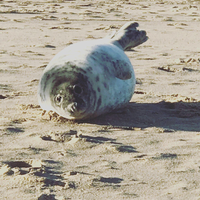 seal-pup-blakeney.jpg