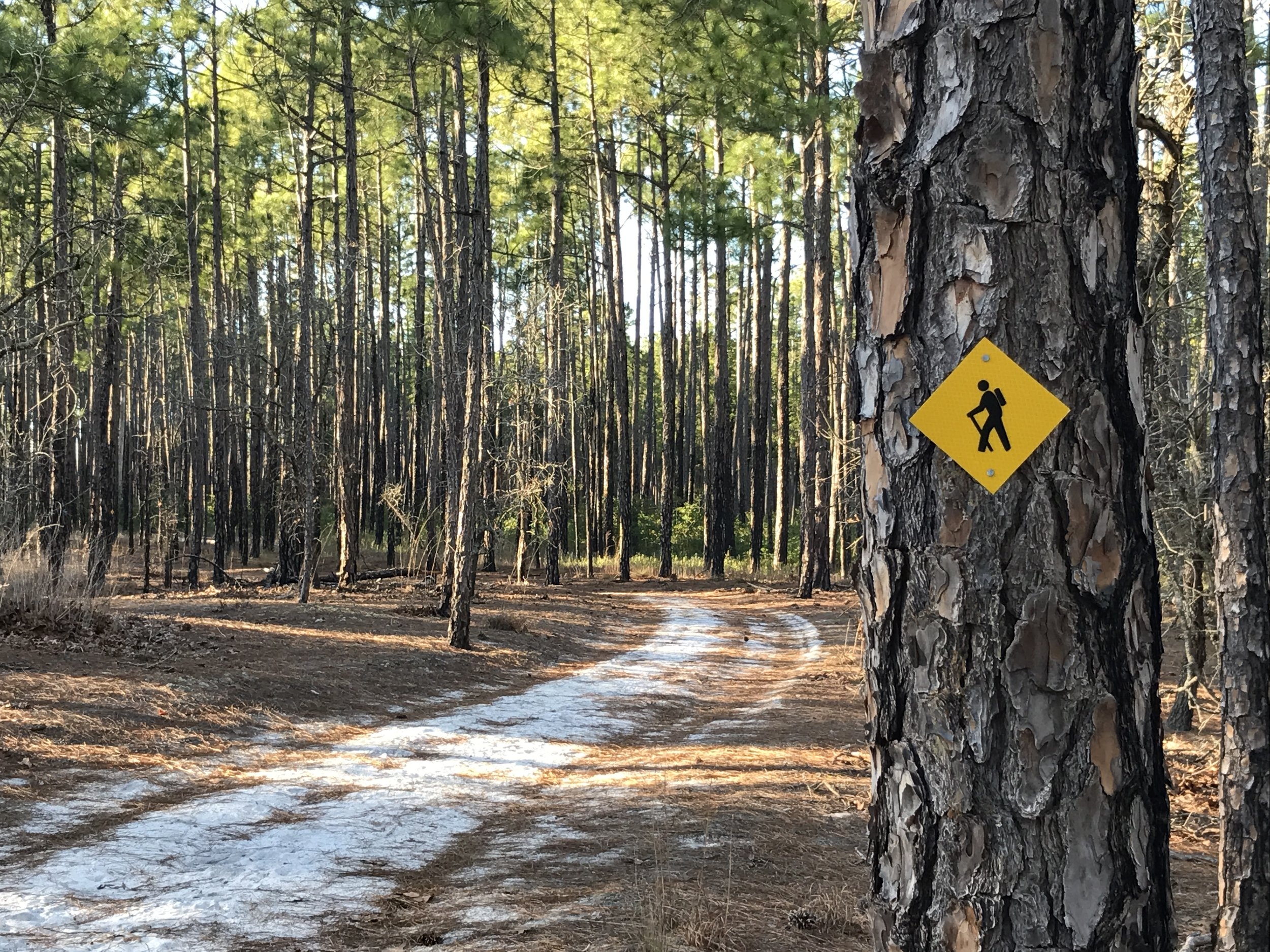 Commissioners approved a request by the Friends of Lake Waccamaw State Park to apply for a Department of Transportation grant to study and plan a trail circling through the town and the park.