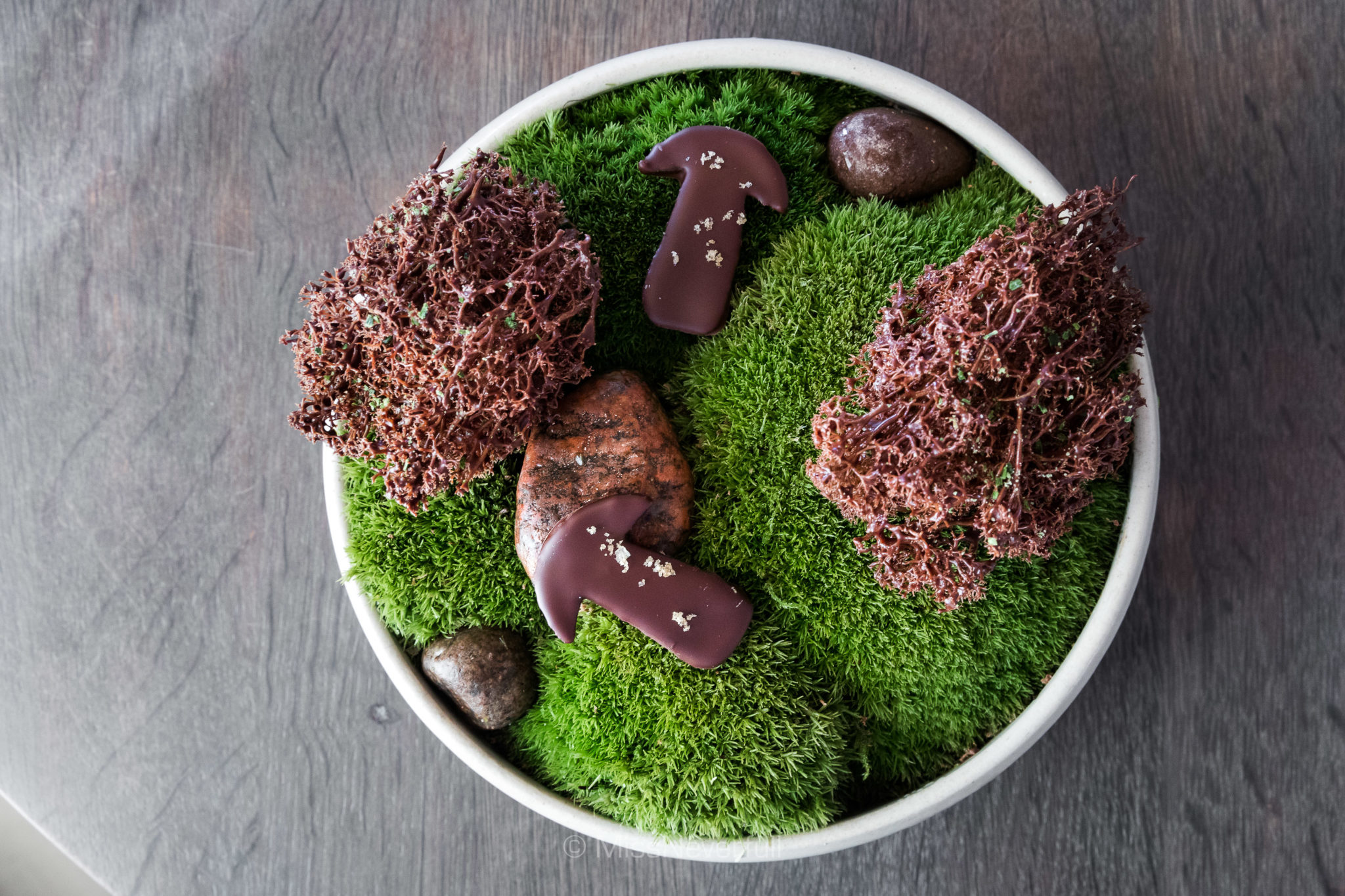15.2 Moss cooked in chocolate, cep mushroom