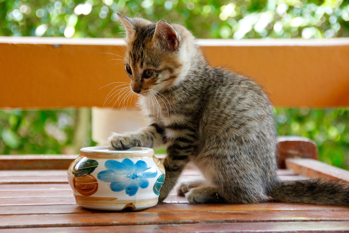 Kitten Wellness Tips