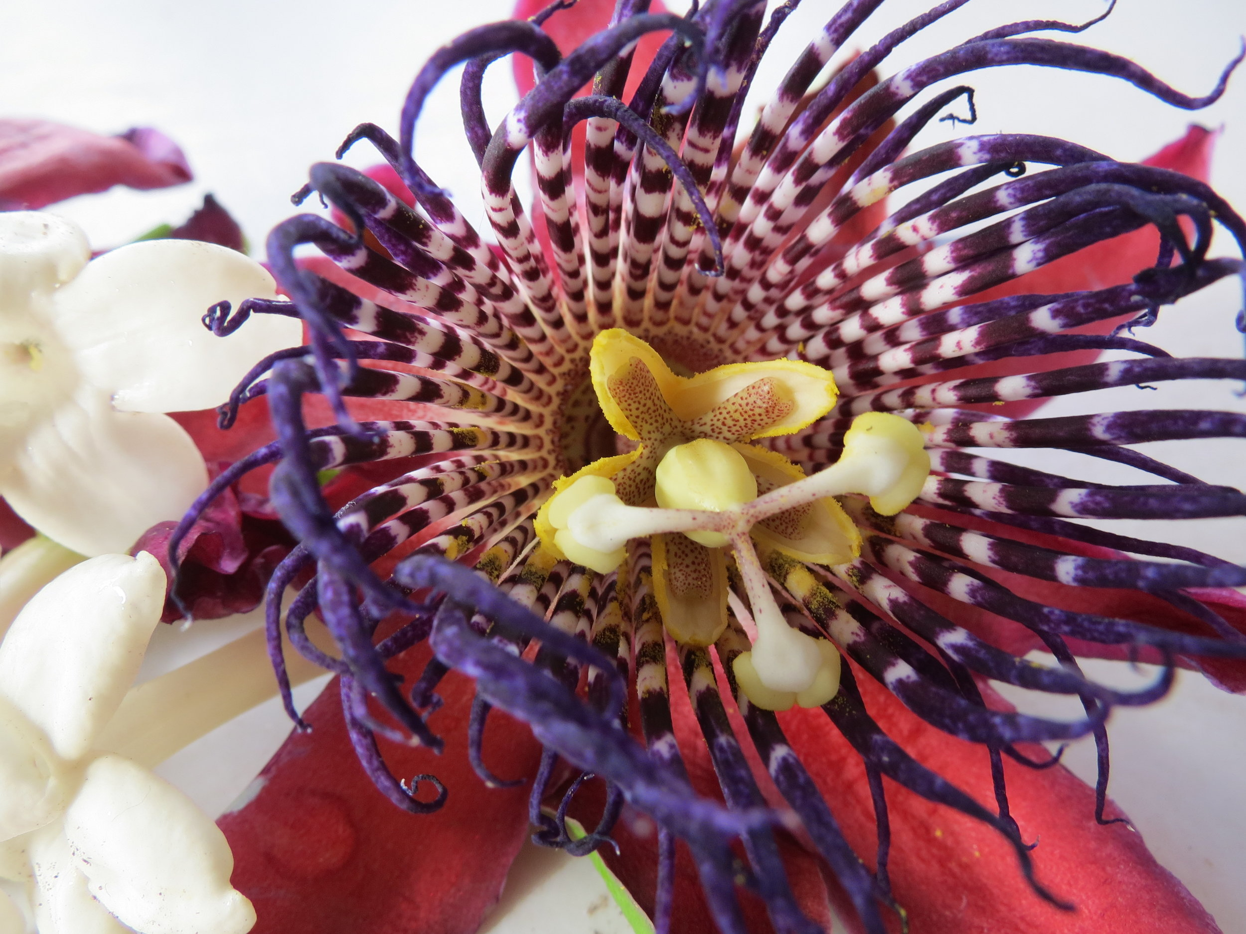 Stephanie Luke - Passionfruit