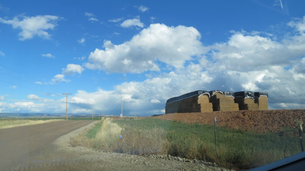 We took a shortcut and it turned out to be a hundred mile dirt road among wheat fields and the Great Sage Plain.