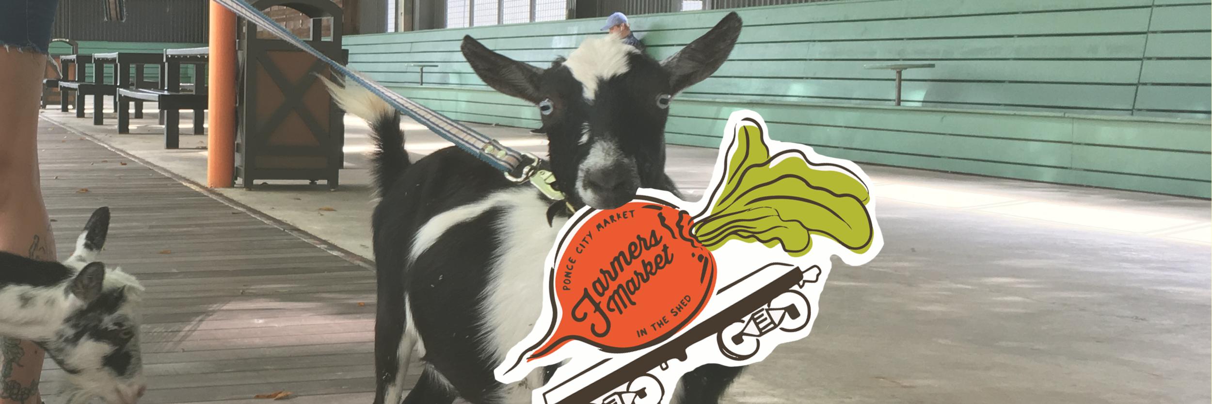 Newsletter_MC Header Goat.png