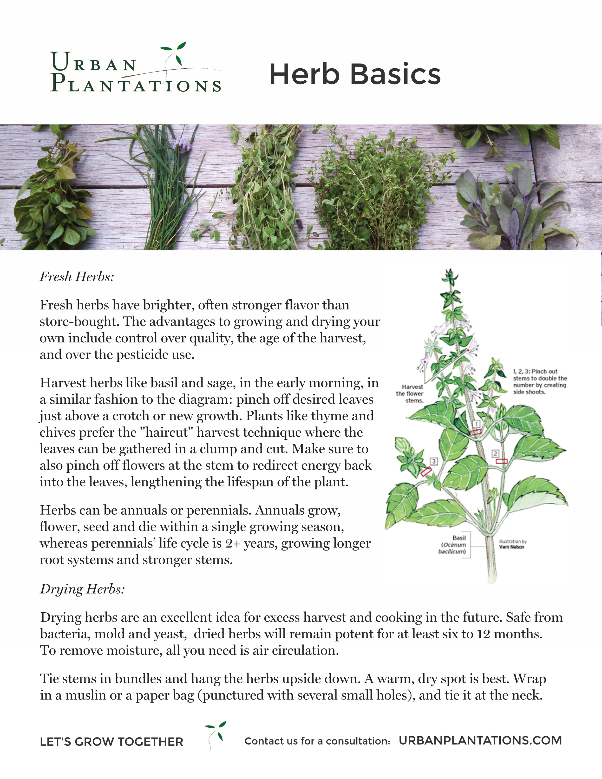 UP Handout- On Herbs.png