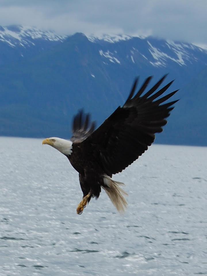 eagle 01.jpg