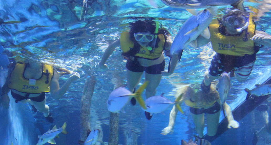 """Now the #3 rated """"Thing to Do"""" in St. Pete Beach on TripAdvisor.com. Conducted in tandem by our aquarist staff and hotel staff. -"""