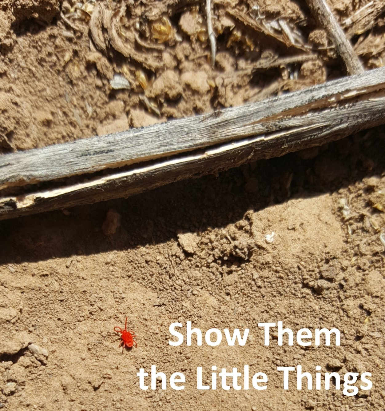 Show them the little things.jpg