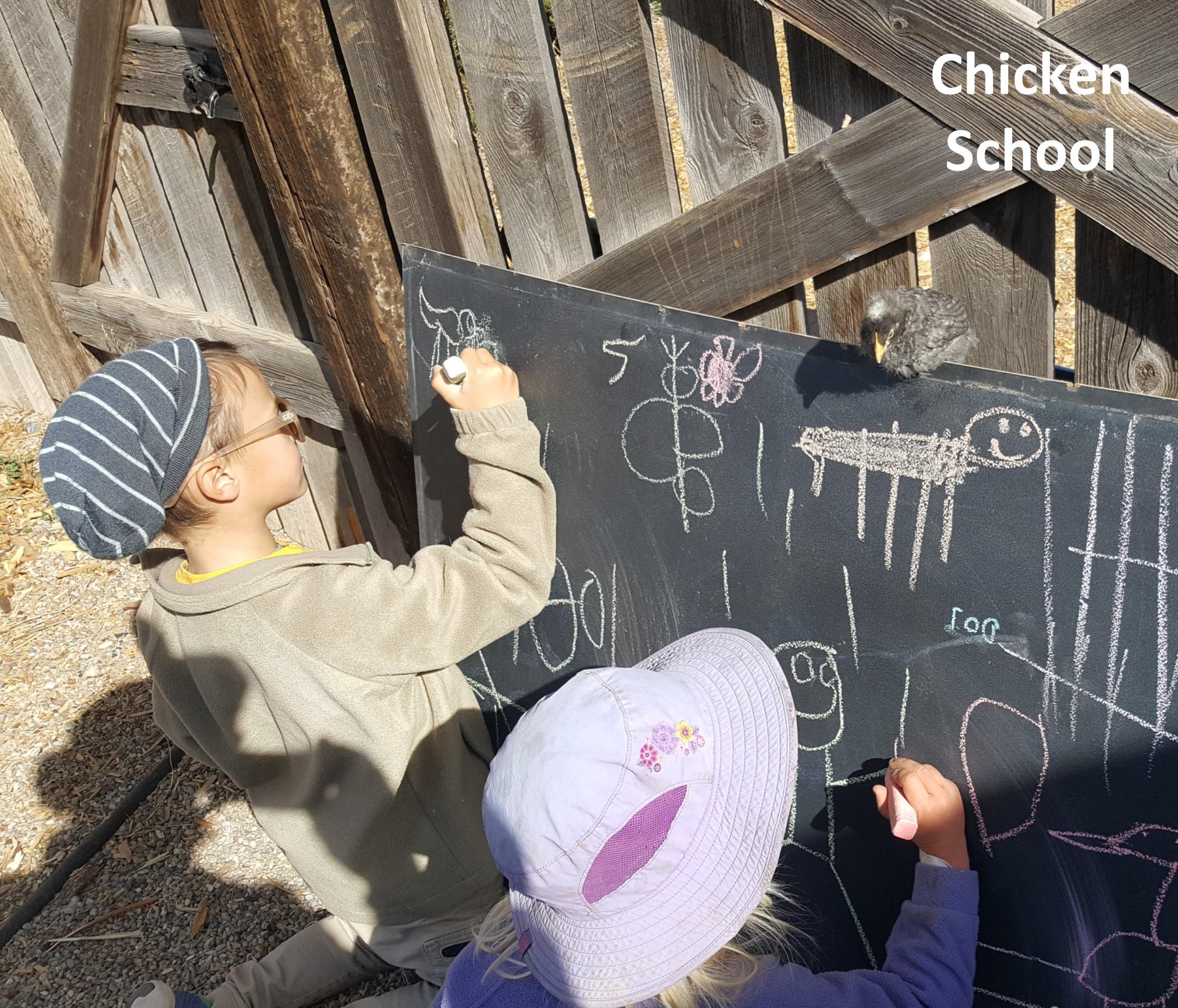 Chicken School.jpg
