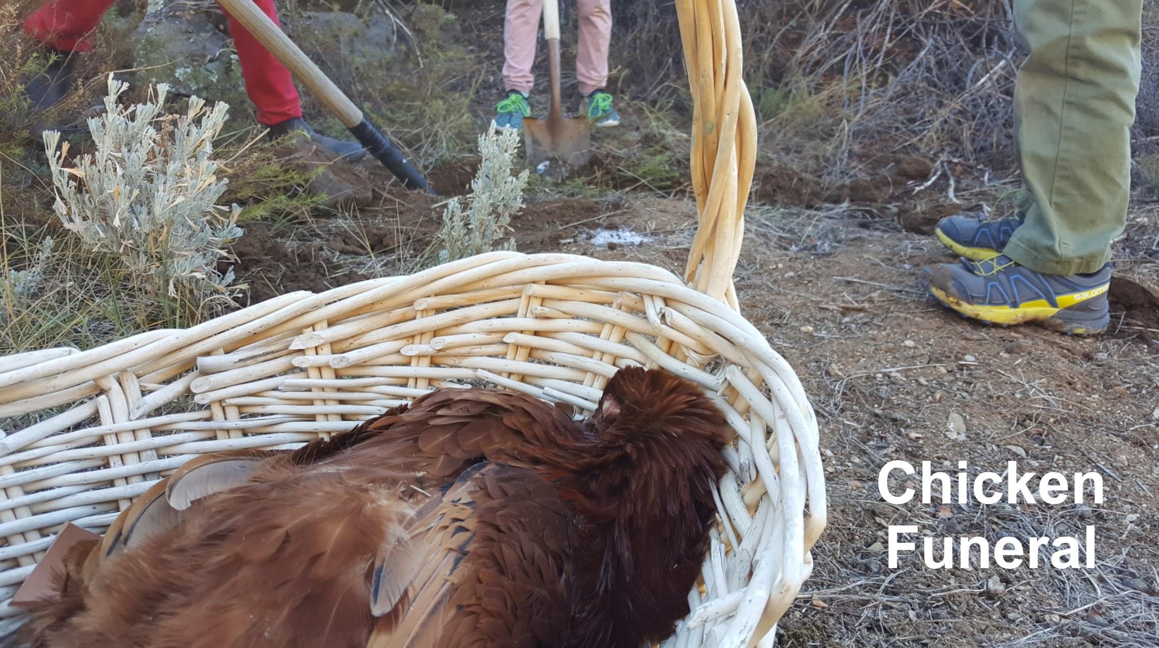 Chicken Funeral.jpg