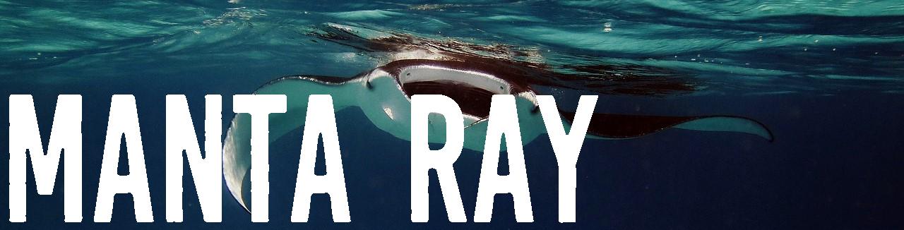 Fish-Manta-Ray-Manta-Ocean-Underwater-Ray-Sea-2064537.png
