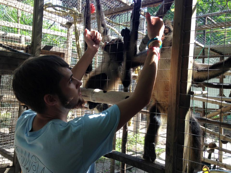 Volunteering at Wildtracks in Belize, here I am feeding two victims of the illegal pet trade (Orphaned spider monkeys) one was found with seven bullet wounds.