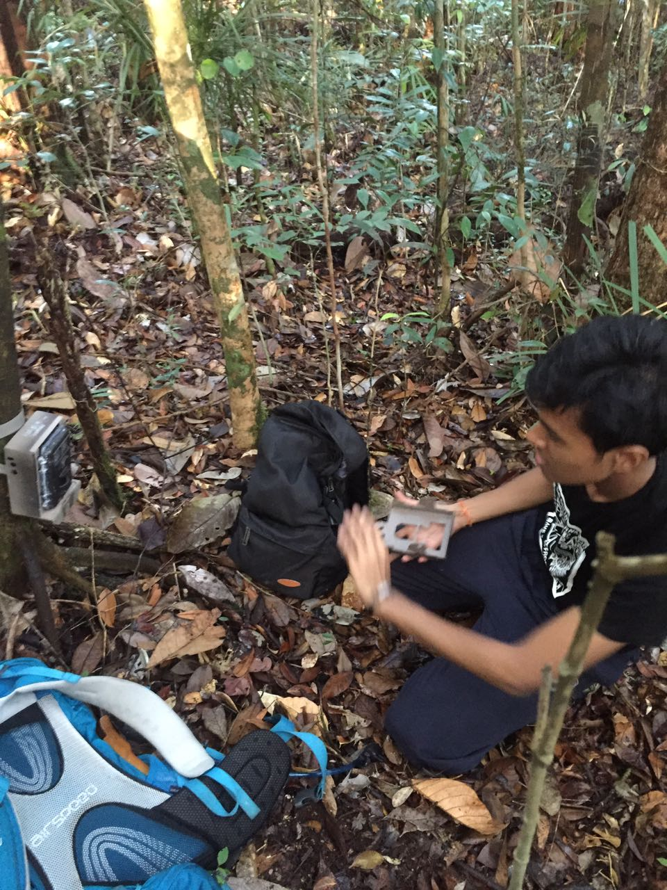 This picture was taken during my final degree year, working on my final year project in Sarawak using camera traps and scent lure as bait.