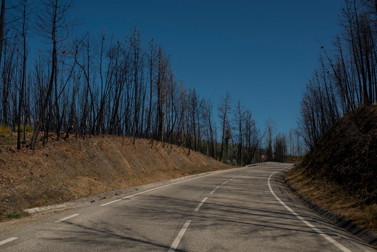 Trecho da estrada EN 236-1 com plantação de eucalipto dos dois lados, em Pedrógão Grande, Portugal. Setembro 2018. © Lucas Landau