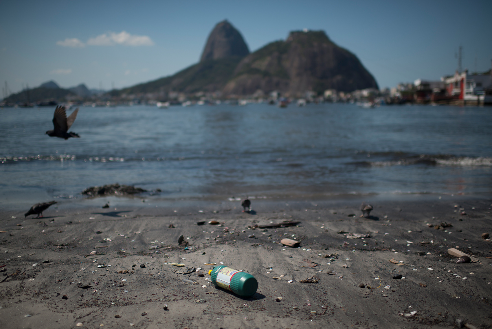 Guanabara Bay is one of the most important icons of Rio de Janeiro, Brazil. It was over these waters that European ships sailed on, some 515 years ago. The bay is home to many marine species, including the endangered Boto Cinza, but nowadays, pollution speaks louder than its beauty and historical importance. Because of that, beaches washed by its waters are not popular, but the animals that inhabit the area are the ones that suffer the most with this situation.