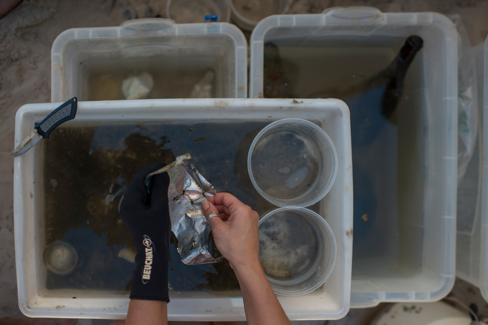 Provided with gloves and knives, volunteers are taught to separate animals into different containers according to the species found. Many times, these creatures find a home in marine debris, and it wouldn't be ethical to take them from their shelter and put them with potential predators. Ed strongly explain this values to anyone who makes themselves available to help.