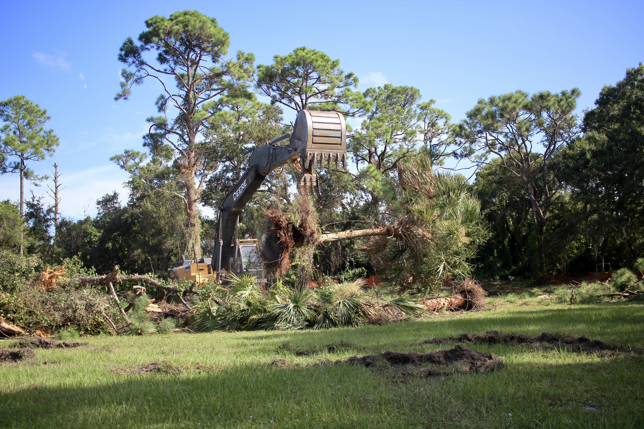 An excavator drops a palm tree into a brush pile.