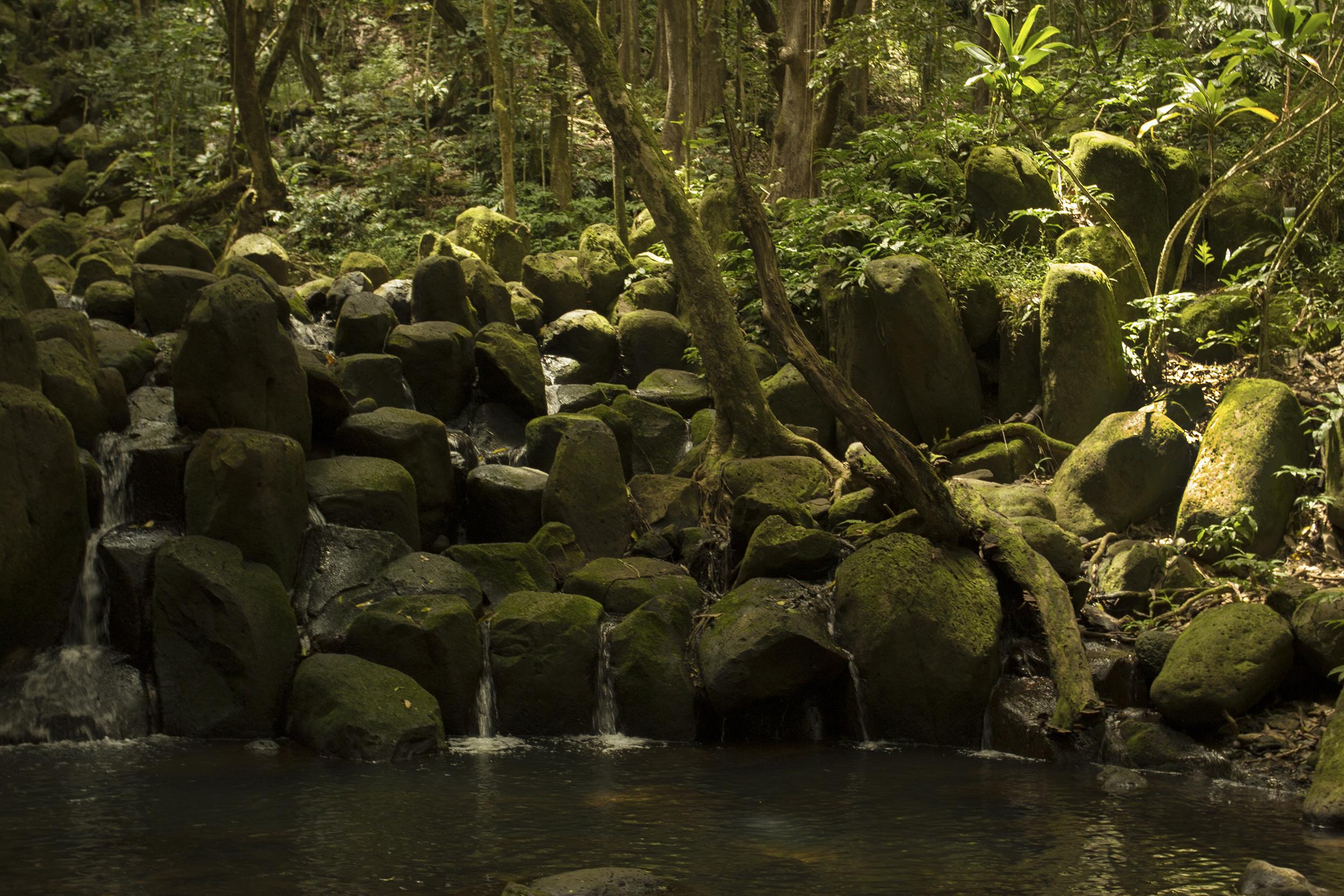 Kauai1_ss.jpg